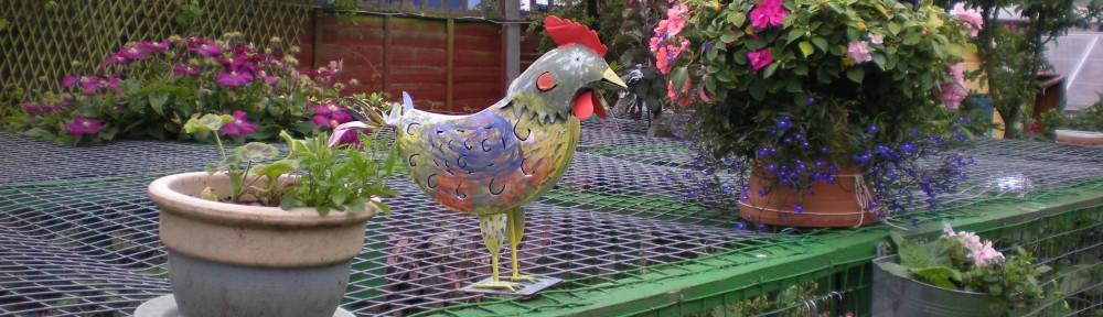 Ayam House